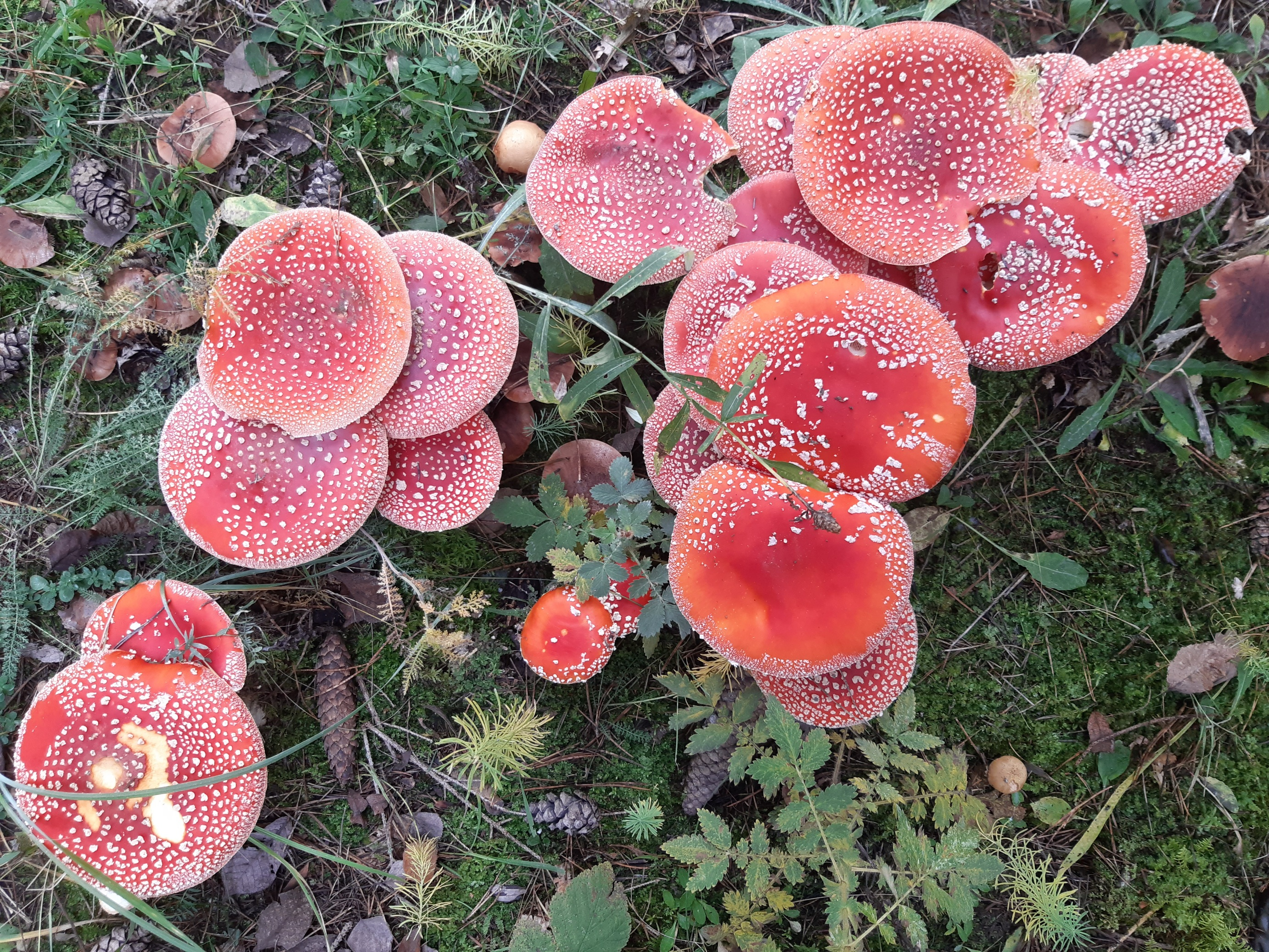 they are going crazy over here!